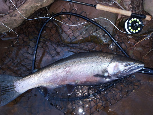 Oak orchard ny migratory brown rainbow fishing update for Oak orchard fishing report