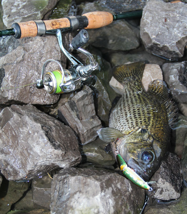 Ultralight fishing for panfish with the rapala f2 spinning for Halo fishing rods