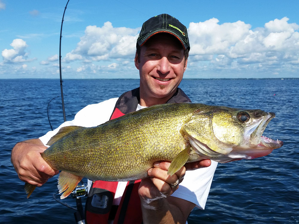 lake erie walleye canadian sportfishing