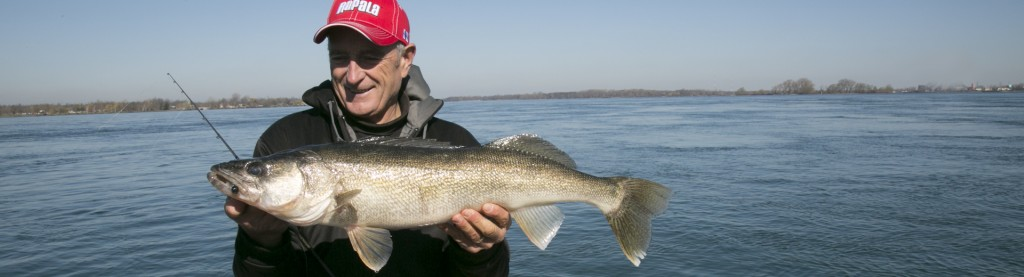 Lake Erie Walleye action!