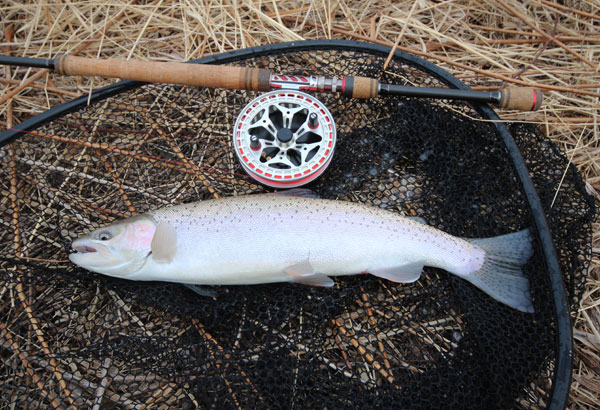 Georgian bay on trout fishing update canadian sportfishing for Bay area fishing spots