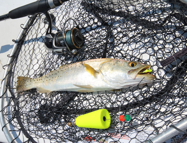 spotted_seatrout_rig