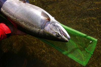 Steelhead fishing locations gta on canadian sportfishing for Good places to go fishing near me
