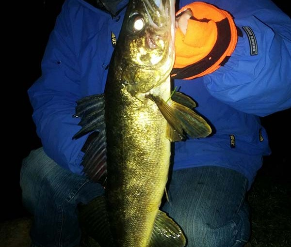 nightime_walleye