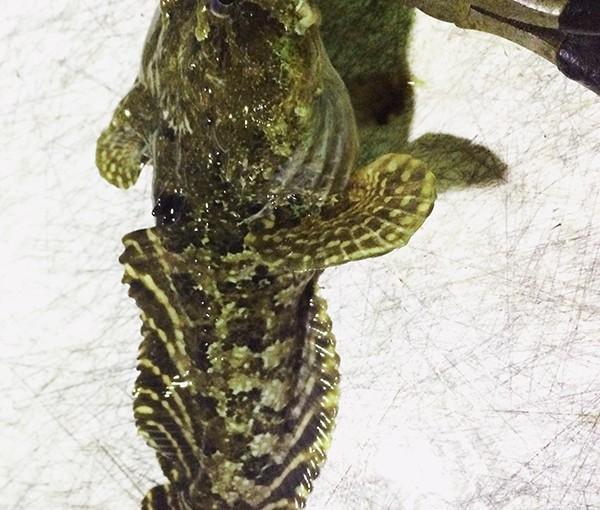 Florida toadfish catch. | Canadian Sportfishing
