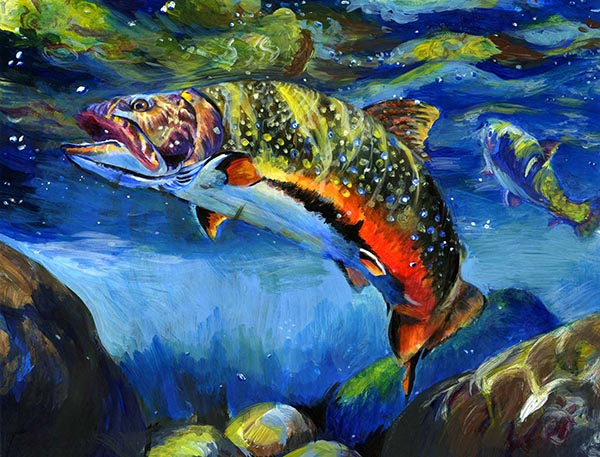 MNR-Fish17-Una Li Brook Trout