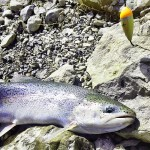 Searching for late May tributary steelhead.
