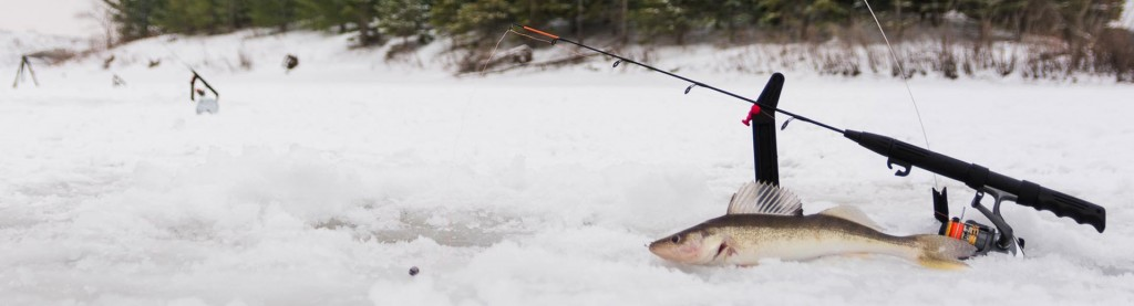 Get ready for winter Walleye through the ice.